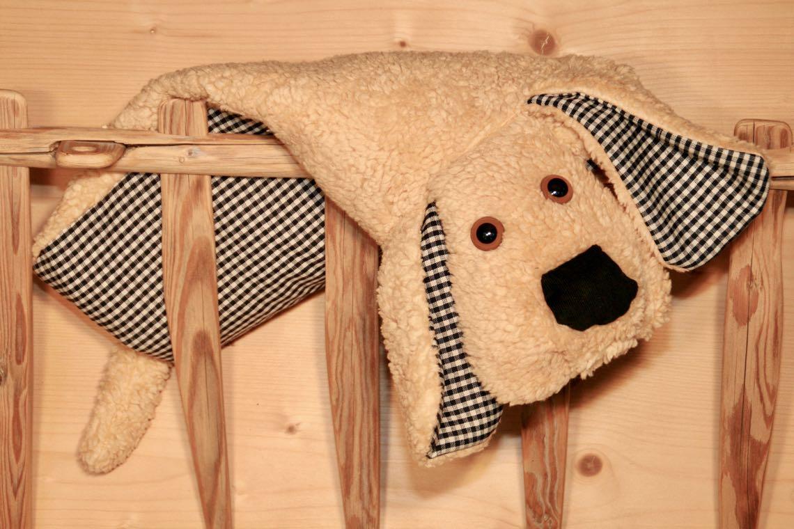 Hund beige Karo blau Ganzkörperfoto