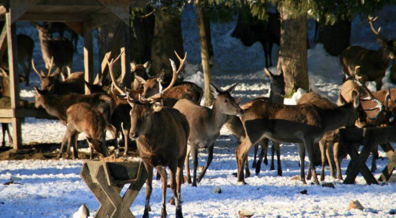 Das 5 t rchen hat sich ge ffnet for Weihnachtsideen 2014