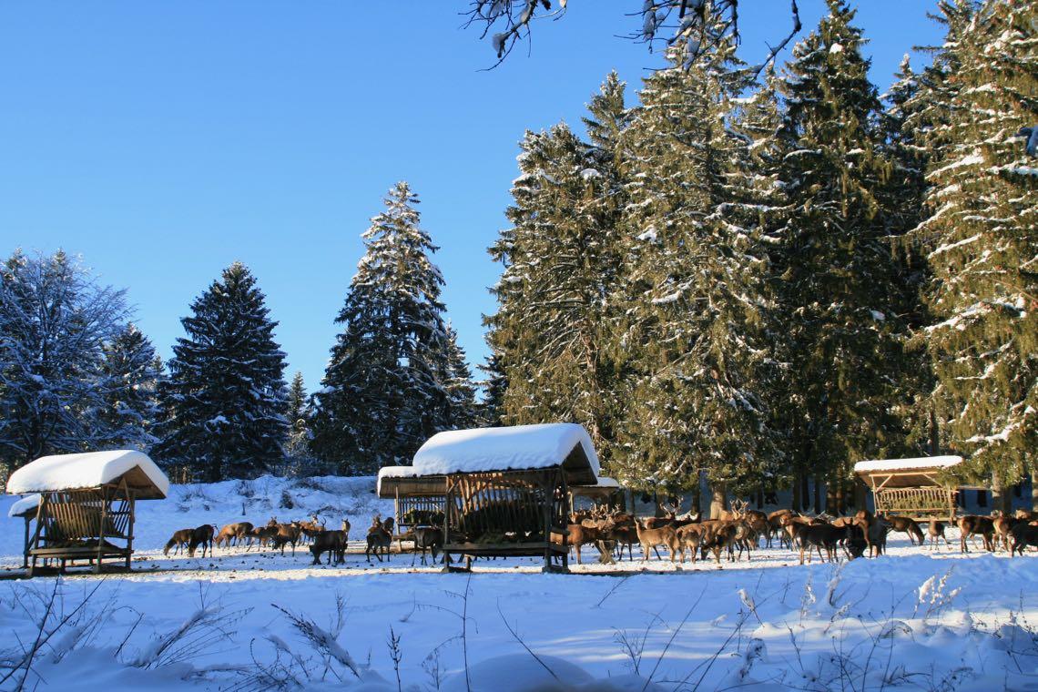 weihnachten-2014-397